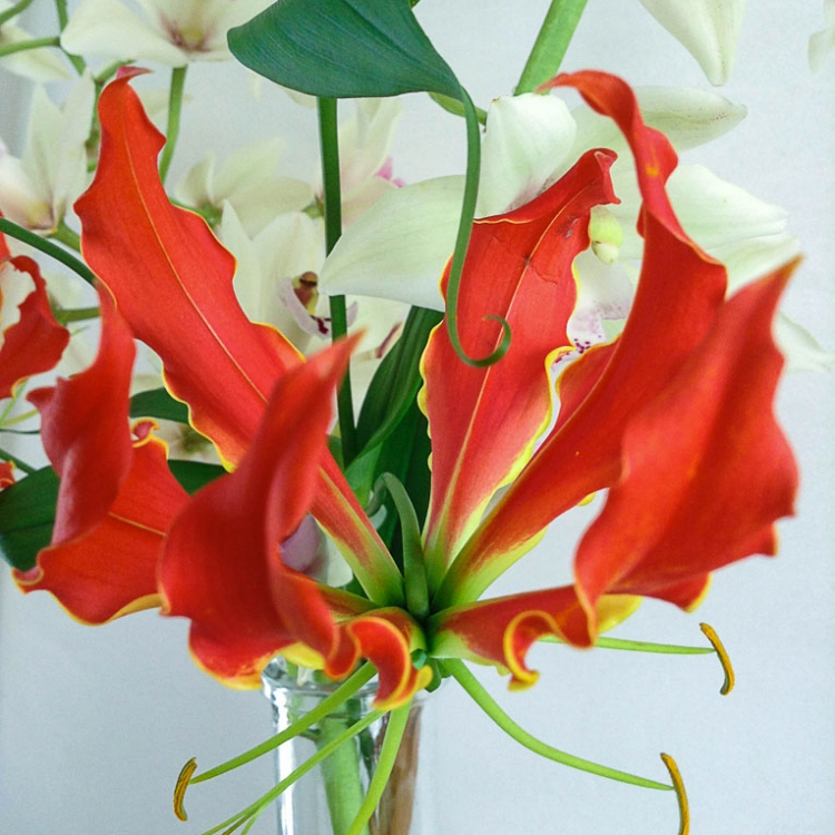 Gloriosa lillies in glass vase